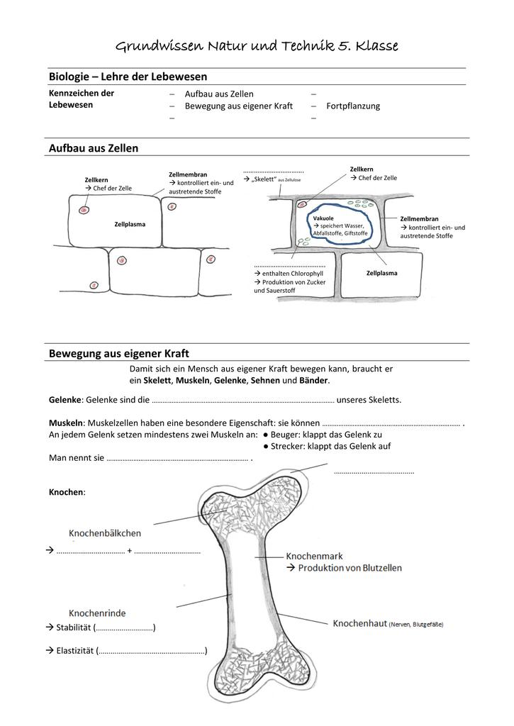 Grundwissen Natur und Technik 5. Klasse
