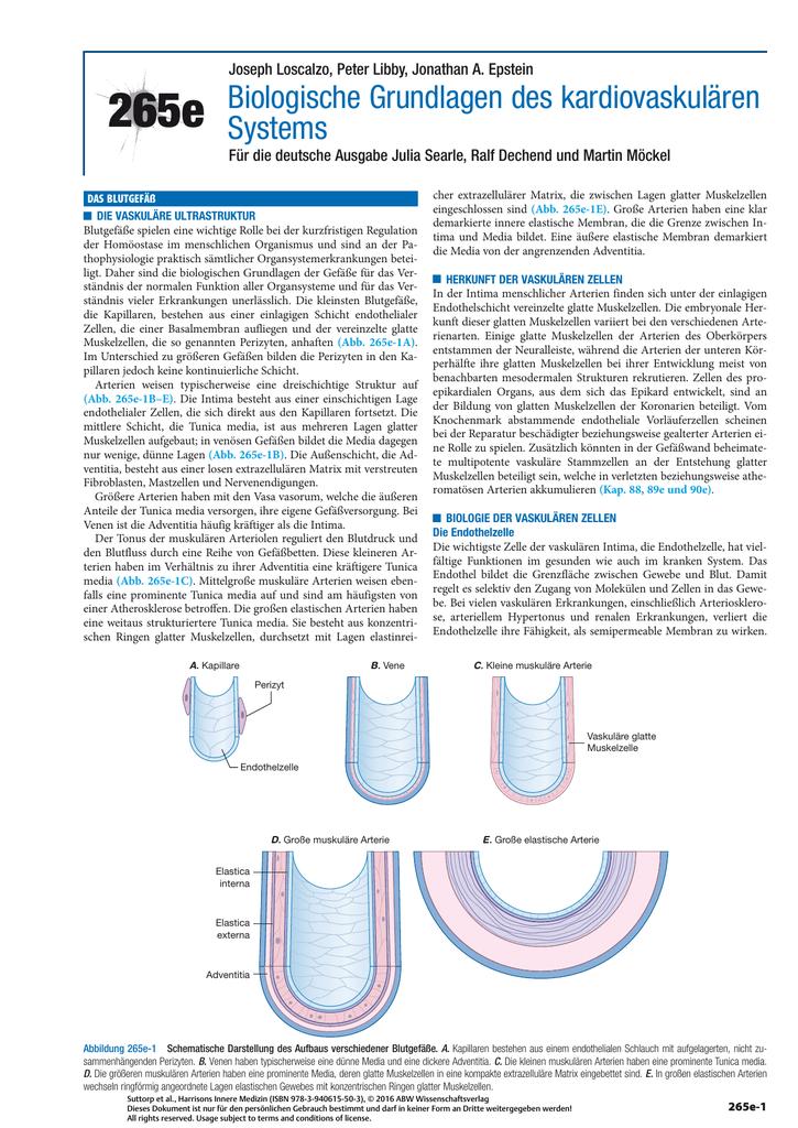 265e Biologische Grundlagen des kardiovaskulären Systems