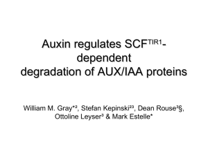 Auxin regulates SCFTIR1-dependent degradation of AUX/IAA proteins