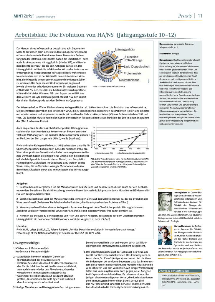 Arbeitsblatt: Die Evolution von HA/NS (Jahrgangsstufe
