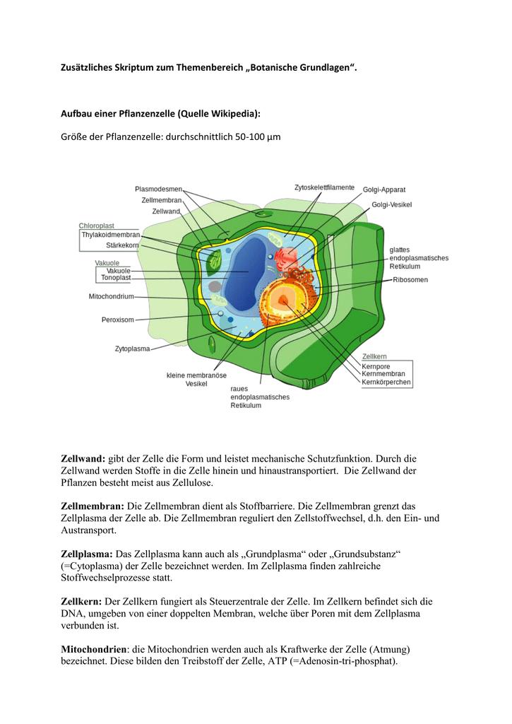 Großzügig Anatomie Einer Pflanzenzelle Galerie - Anatomie Ideen ...