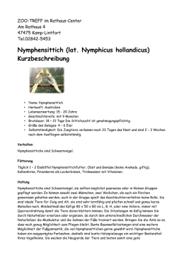 Nymphensittich (lat. Nymphicus hollandicus) - ZOO