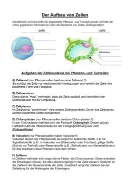 Tier- und Pflanzenzellen