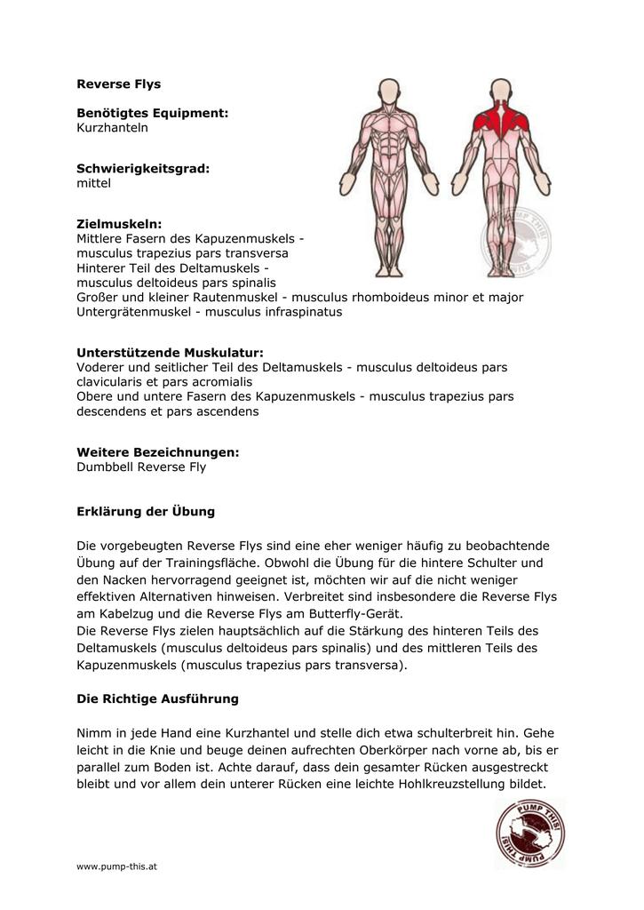 Schön Muskeln Des Oberen Rückens Zeitgenössisch - Anatomie Ideen ...
