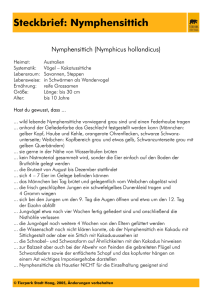 Steckbrief: Nymphensittich