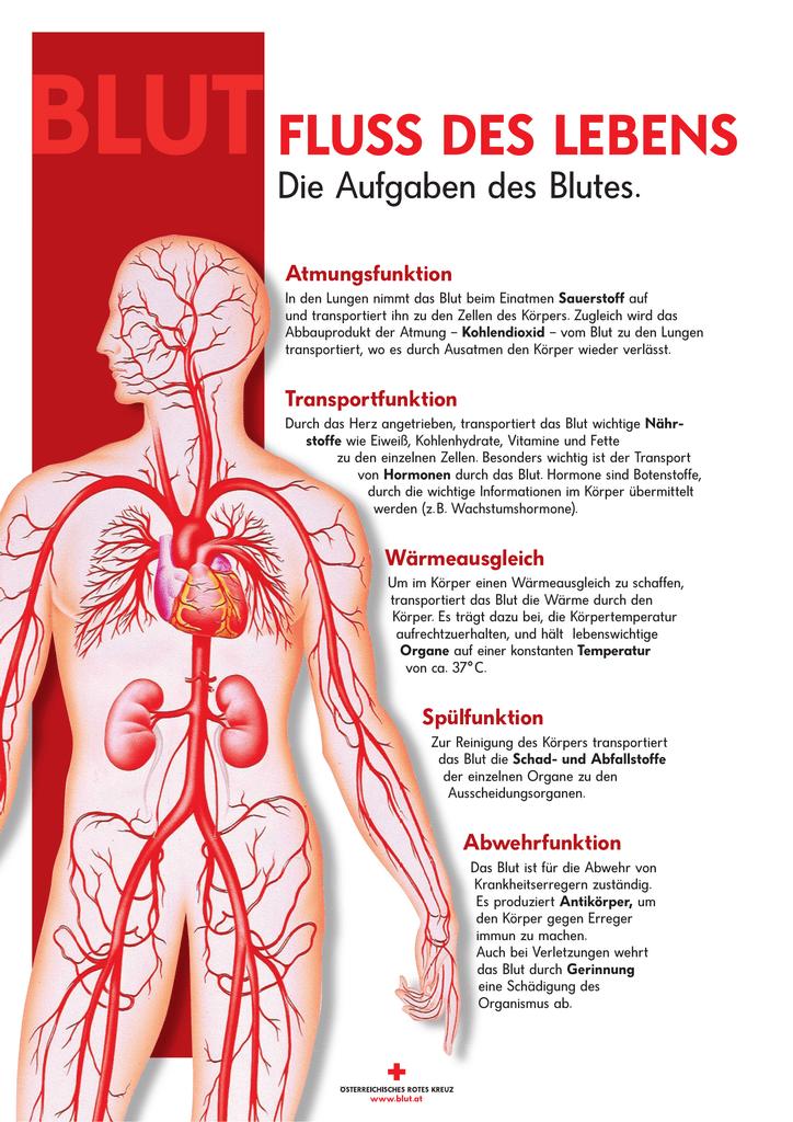 Niedlich Anatomie Der Lebenswichtigen Organe Galerie - Menschliche ...