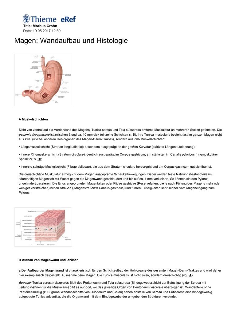 Magen: Wandaufbau und Histologie