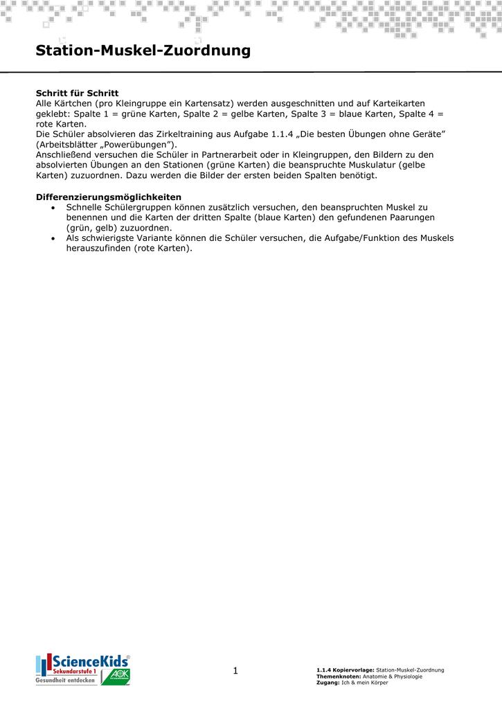 Kopiervorlage: Station Muskel Zuordnung