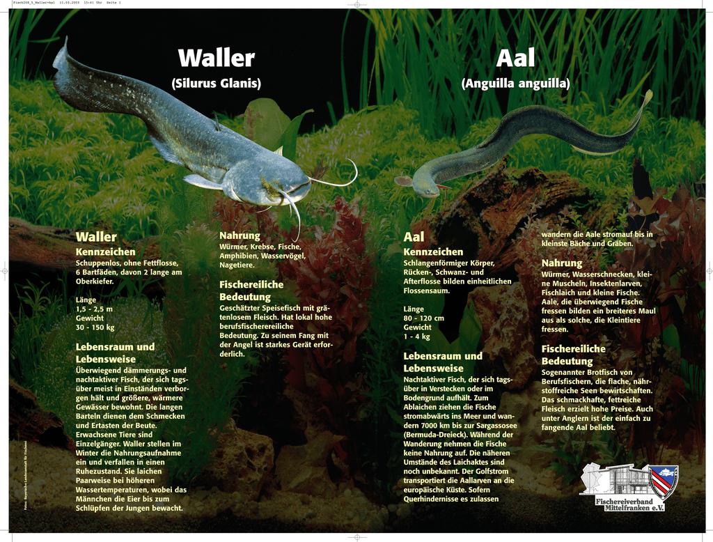 ein schlangenförmiger fisch