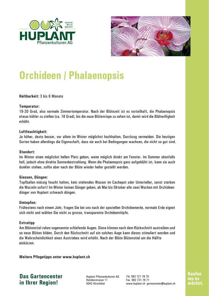 Orchideen Phalaenopsis Huplant Pflanzenkulturen Ag