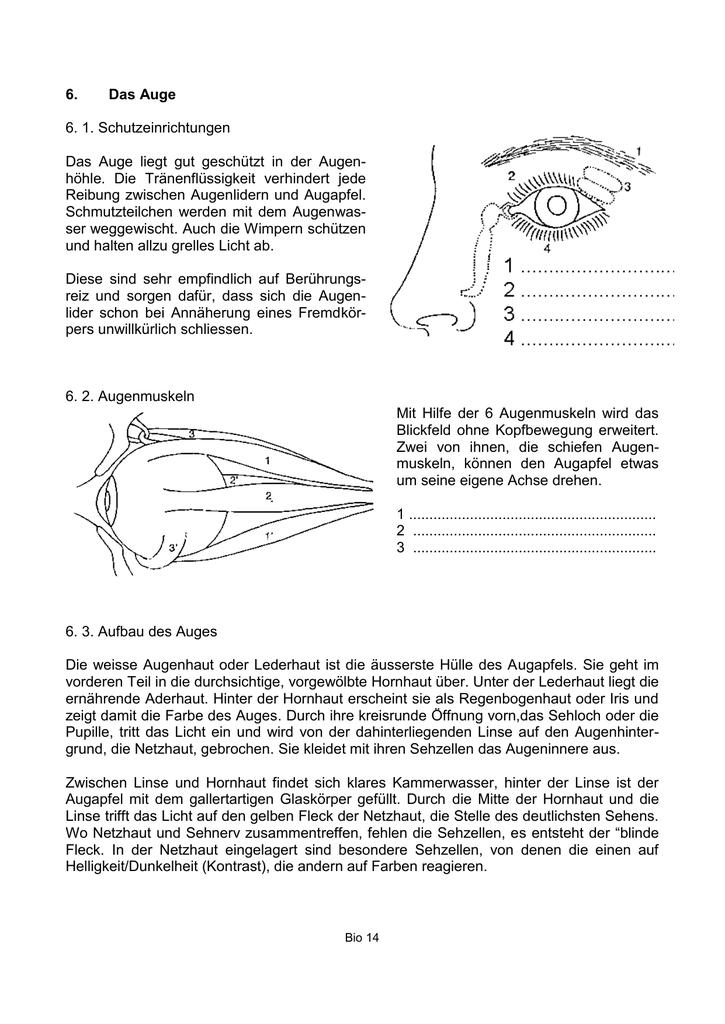14-Auge-1 - educa.Unterricht