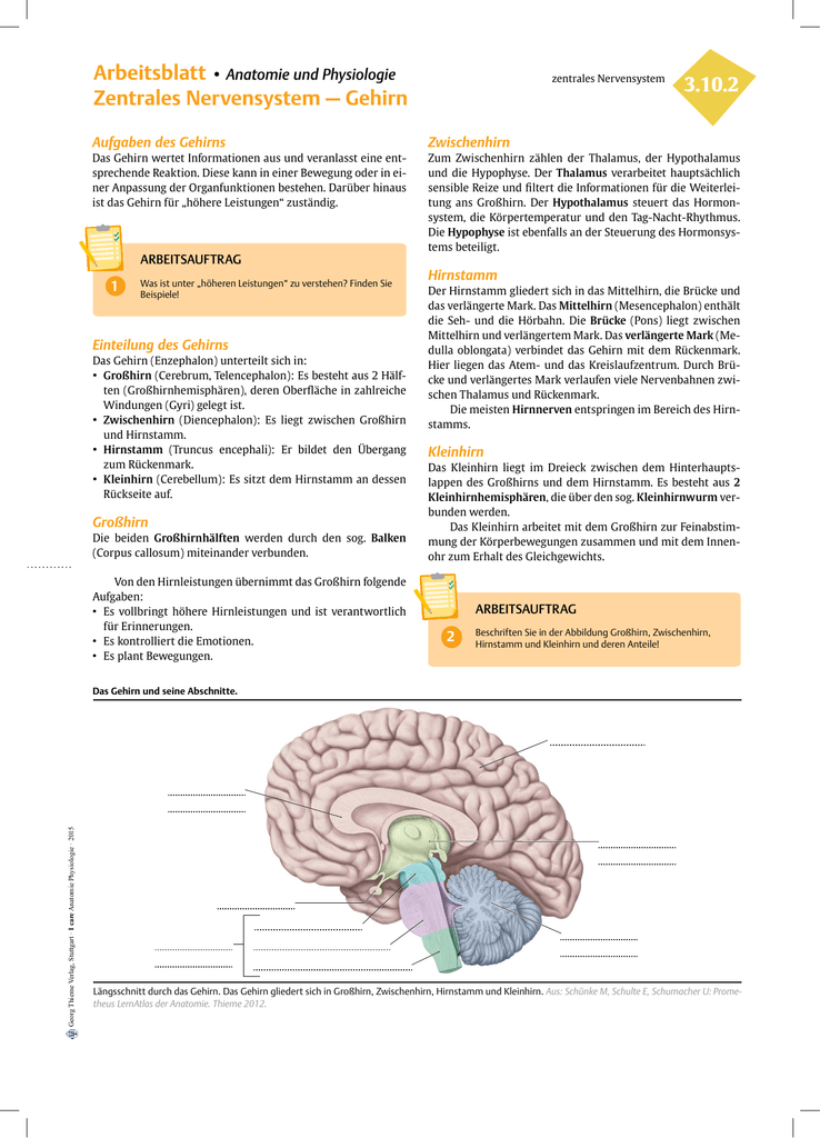 3.10.2 ZNS Gehirn