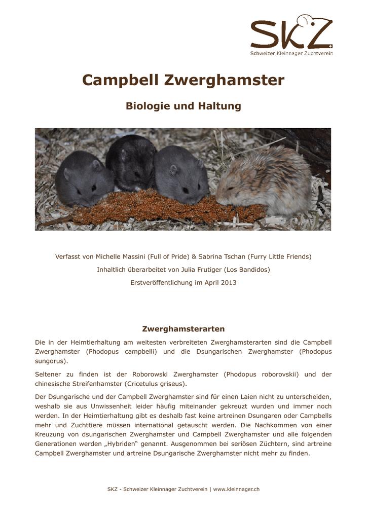 Campbell Zwerghamster