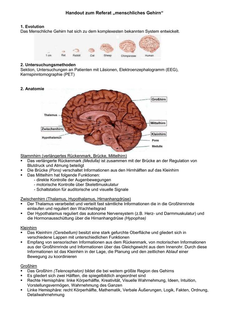 Erfreut Anatomie Des Gehirns Funktionen Bilder - Menschliche ...
