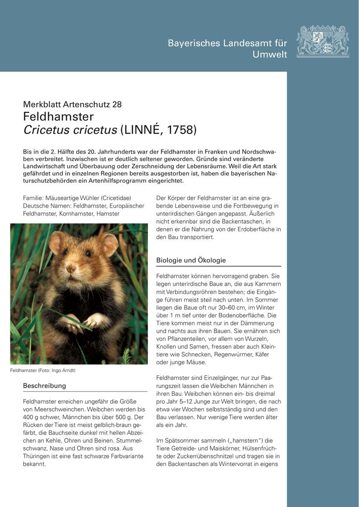 Merkblatt Feldhamster - Bayerisches Landesamt für Umwelt