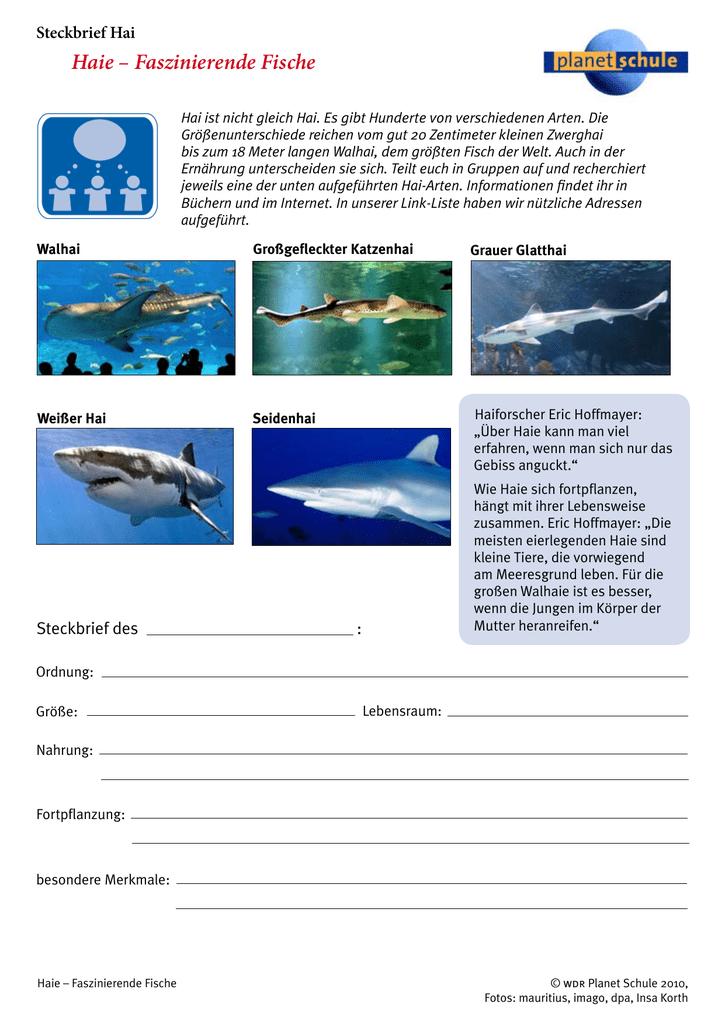 sind haie fische