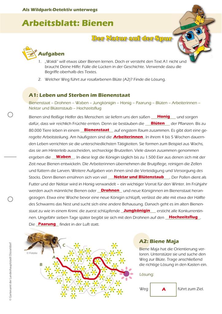 Arbeitsblatt: Bienen