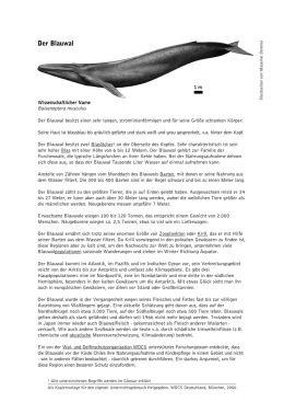 Der Blauwal - Whale and Dolphin Conservation