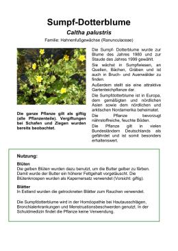 sumpf dotterblume - Einkeimblattrige Pflanzen Beispiele