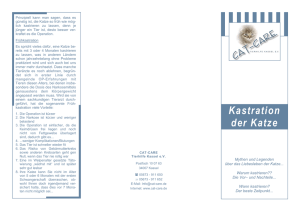 Flyer-Kastration farbig