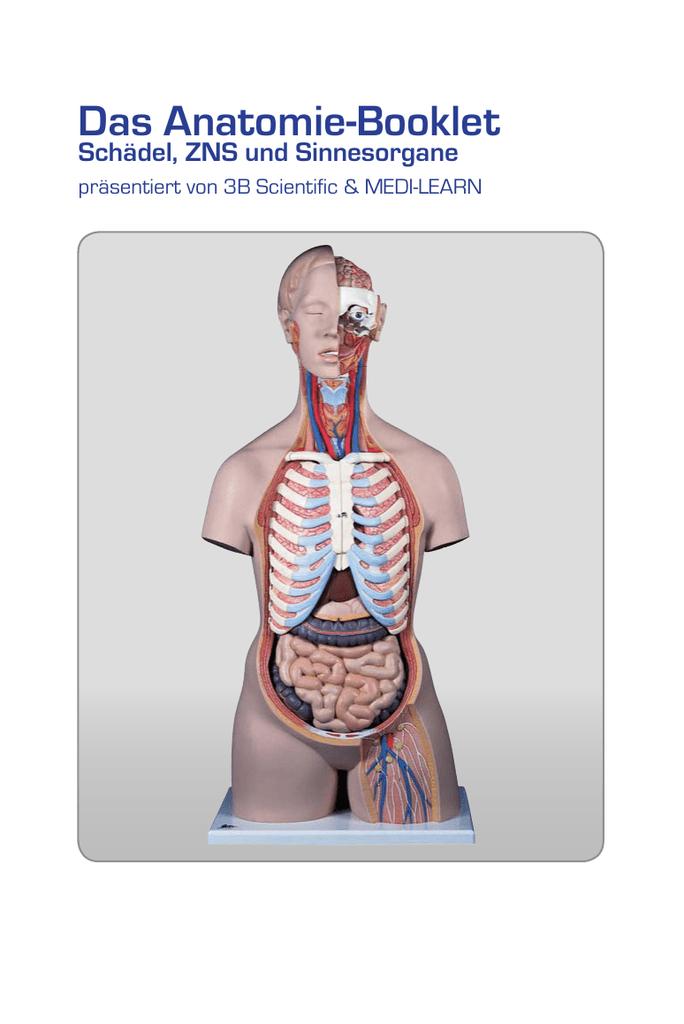 Das Anatomie-Booklet Schädel, ZNS und Sinnesorgane - Medi