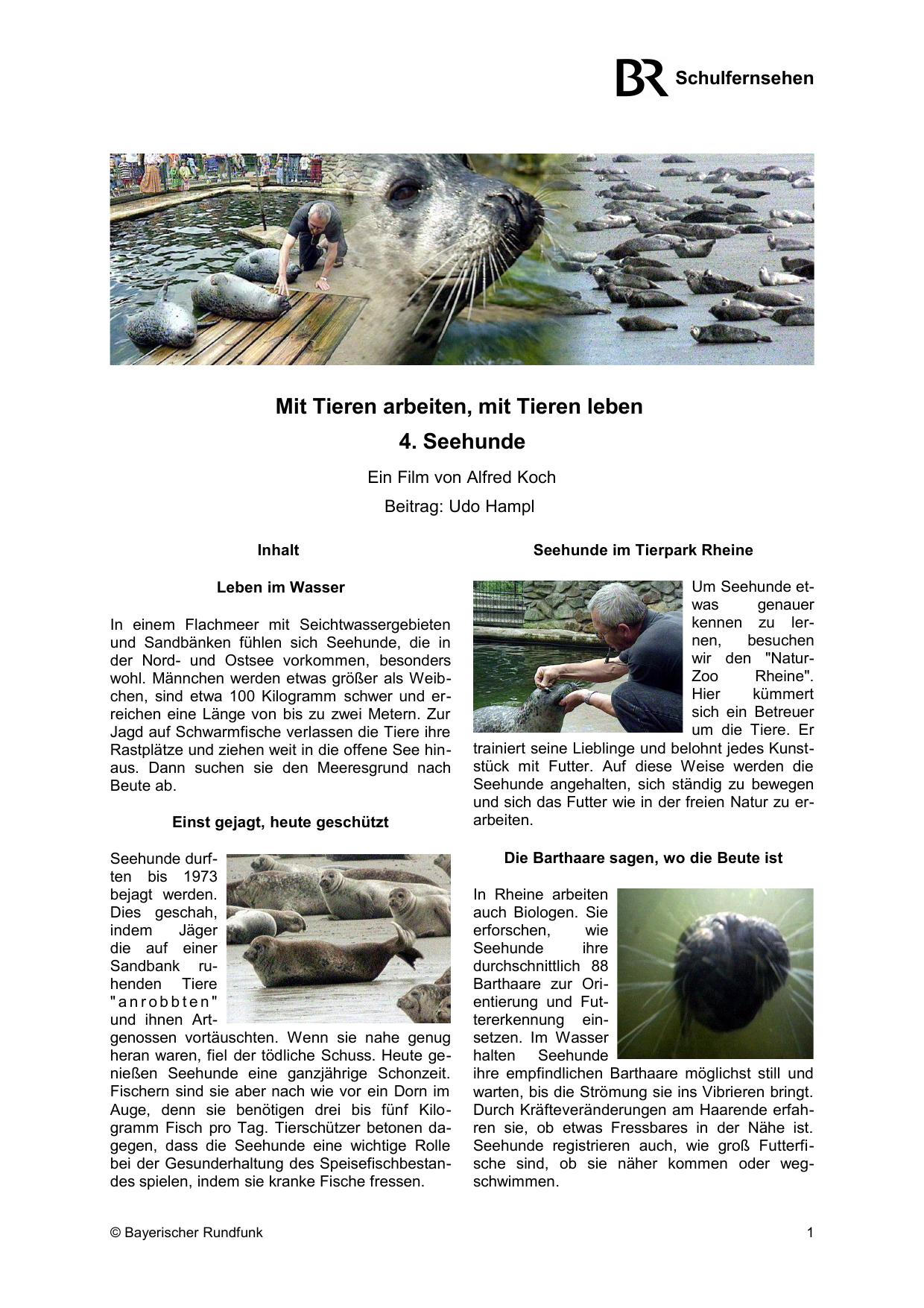 Mit Tieren arbeiten, mit Tieren leben 4. Seehunde