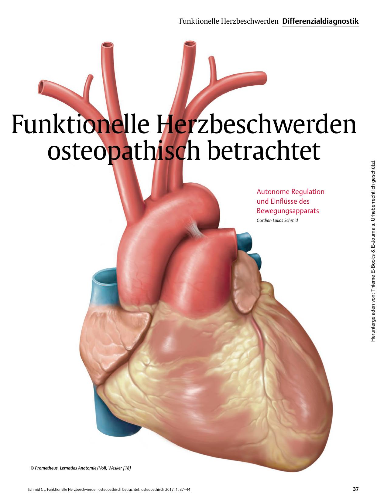 Funktionelle Herzbeschwerden osteopathisch