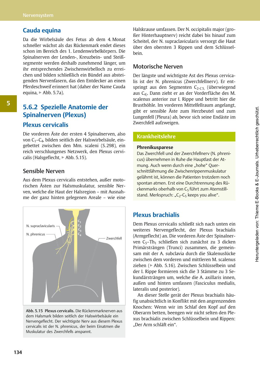 Cauda equina 5.6.2 Spezielle Anatomie der