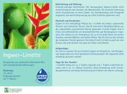 Ingwer-Limette - Spitzner Physiotherapie